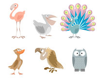 Six funny birds Stock Photo