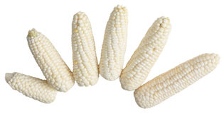 Six grains blancs photographie stock libre de droits