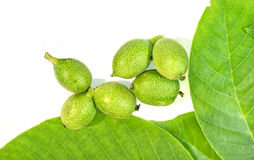 Six green young walnuts in husks with walnuts leavs on white bac Royalty Free Stock Photography
