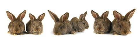 Six grey  rabbit Royalty Free Stock Image