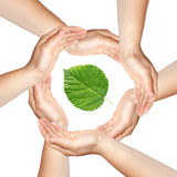 Six hands with green leaf Stock Photos
