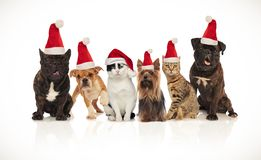 Six happy cats and dogs wearing santa hats. Sitting and standing on white background stock image