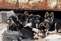 Six homeless puppies. At objective of a camera Stock Images