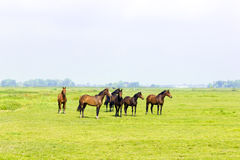 Six horses in a green meadow Stock Photo