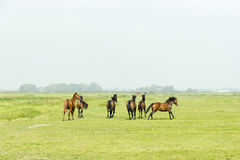 Six horses in a green meadow Stock Images