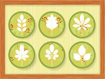 Six icons with different leaves in a wooden frame Royalty Free Stock Photos
