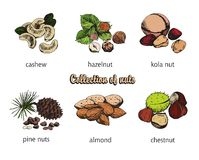 Six kinds of nuts Stock Photos