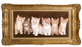 Six kittens Stock Images