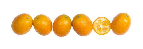 Six kumquats ovales dans une rangée sur le fond blanc Image libre de droits
