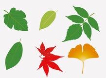 Six Leaves Stock Image