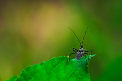Six-legged insects. Royalty Free Stock Images
