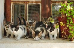 Six little cats royalty free stock image