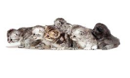 Six little kitten Royalty Free Stock Images