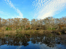 Six Mile Cypress Slough Preserve royalty free stock images