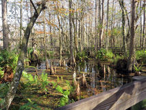 Six Mile Cypress Slough Preserve Stock Photography