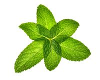 Six mint leaves in pattern Royalty Free Stock Image