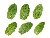 Six mint leaves set isolated on white background Stock Photography