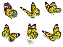 Six monarch butterflies set. Beautiful Six monarch butterflies set, isolated on white background stock photo