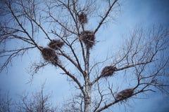 Six nids de cigogne Images libres de droits