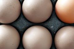 Six oeufs de poulet images stock