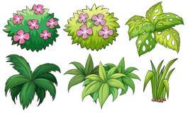 Six ornamental plants Royalty Free Stock Photos