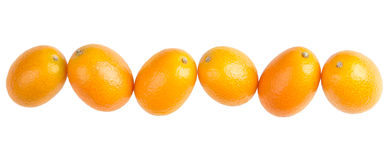 Six Oval Kumquats In A Row On White Background Stock Photography