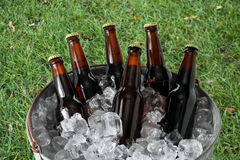 Six Pack of Beer in Ice Bucket. A six pack of homebrew beer in a galvanized steel ice pail Royalty Free Stock Photography