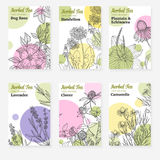 Six package templates for herbal tea or natural cosmetic. Fresh modern design with white background, cards with botanical sketch of medicinal herbs and flowers Stock Photo