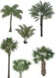 Six palmiers de couleur Photos libres de droits