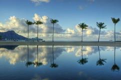 Six Palms Royalty Free Stock Image