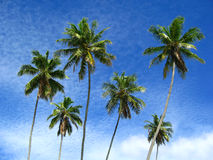 Six Palms. Six palm trees silhouetted against a cloudy blue sky royalty free stock image