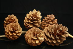 Six pine cones Stock Images