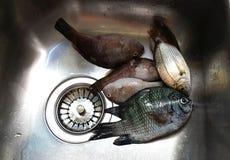 Six poissons dans l'évier Image libre de droits
