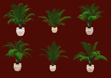 Six Potted Palms 3d CG Stock Images