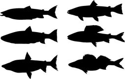 Six predator fish silhouettes. Illustration with six fish silhouettes isolated on white background Royalty Free Stock Image