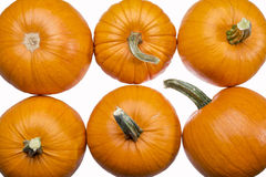 Six pumpkins on white Royalty Free Stock Photo