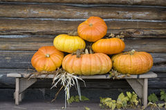 Six pumpkins on wooden bench. Pyramid of six orange pumpkins on a wooden bench, near the wall of loghouse. Straw wisp, hops and  hop`s leaves between pumpkins Stock Photography