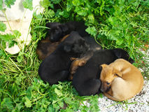 Six puppies. Lot of puppies lying on the grass in the spring sunshine Stock Photos