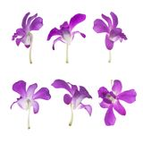 Six Purple orchids isolated on white Stock Photo