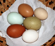 Six rare breed colourful chicken and duck eggs Stock Photo