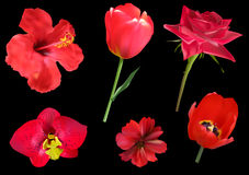 Six red flowers isolated on black Stock Image