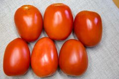 Six red Roma tomatoes. Nutritious. Great source of vitamin A and C and lycopene. It is fleshy. Plump good for canning and making tomato paste Stock Photo