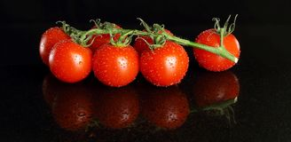Tomatoes on vine with black background royalty free stock images