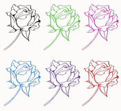 Six rose isolated Royalty Free Stock Photo