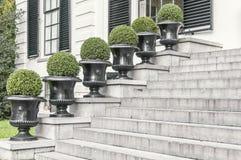 Six round shrubs placed next to a concrete stairway. Six round shrubs lined up in a row next to a concrete stair stock photo