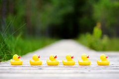 Six rubber ducklings crossing the street. To get to the other side Royalty Free Stock Photo