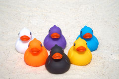 Six rubber ducks on the beach Royalty Free Stock Photo