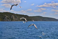 Six sea gulls with wings wide spread are flying above the water royalty free stock photography
