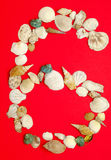 Six with sea shells Royalty Free Stock Image