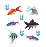 Six separate fishes Royalty Free Stock Photo